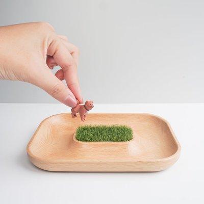 TOSMU 童心木|木製小物眼鏡收納盤 - 沙漠綠洲